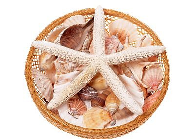 starfish, shells and snails several species in basket on a white background